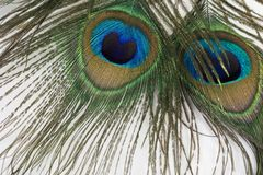 Olhos assustadores Fotografia de Stock