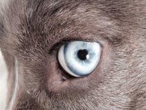 Olhos azuis Imagens de Stock