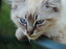 Olhos azuis do bebê imagens de stock royalty free