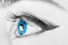 Olhos azuis preto e branco da mulher imagem de stock