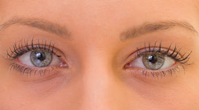 Olhos bonitos Fotos de Stock