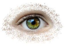 Olhos bonitos que começaram a quebrar fotografia de stock
