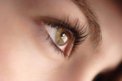 Olhos côr de avelã Fotografia de Stock
