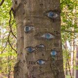 Olhos cinzelados no tronco de árvore Foto de Stock