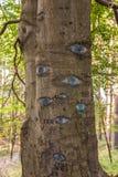 Olhos cinzelados no tronco de árvore Fotografia de Stock Royalty Free