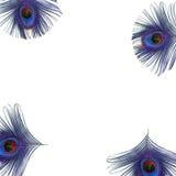 Olhos da pena do pavão Fotos de Stock
