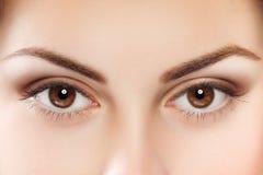 Olhos de Brown imagem de stock