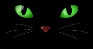 Olhos de gato Foto de Stock