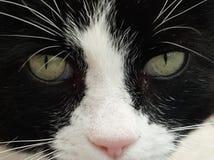 Olhos de gato brancos pretos Imagens de Stock Royalty Free