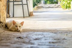 Olhos de gato coloridos fotografia de stock