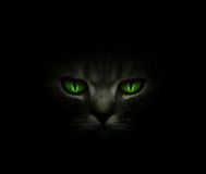 Olhos de gato verdes que incandescem na obscuridade fotografia de stock