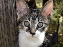 Olhos de um gato fotos de stock royalty free