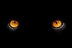 Olhos de uma pantera Fotografia de Stock