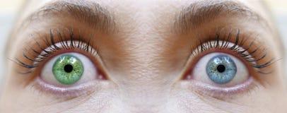 Olhos diferentes das cores do olho, os azuis e os verdes imagens de stock royalty free