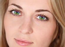 Olhos do arco-íris fotos de stock royalty free