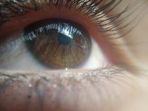 olhos fêmeas marrons que olham o céu muito bonito Foto de Stock
