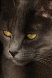 Olhos intensos Fotos de Stock Royalty Free