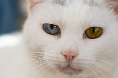 Olhos loucos Foto de Stock