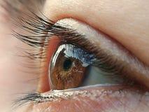 Olhos marrons côr de avelã fotografia de stock royalty free