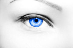 Olhos perspicaz do olhar fotografia de stock royalty free