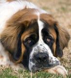 Olhos tristes Foto de Stock Royalty Free