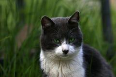 Olhos verdes Fotografia de Stock Royalty Free