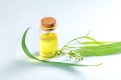 Oli essenziali dell'eucalyptus in bottiglia di vetro, aromath di erbe oganic Immagini Stock