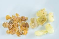 Olibanum, Boswellia serrata Royalty Free Stock Photos