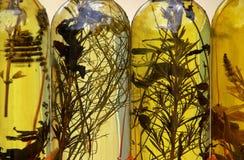Olie 01 van kruiden Stock Fotografie