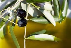 Olie en olijven stock foto's