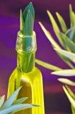 Olie van de Olijfboom stock fotografie