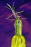 Olie van de Olijfboom, rozemarijn royalty-vrije stock afbeelding
