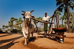 Olieproductie in Myanmar Royalty-vrije Stock Afbeeldingen