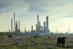 Olieraffinaderijen en vee Stock Foto's