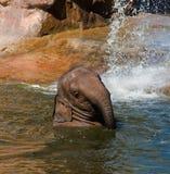 Olifant Royalty-vrije Stock Afbeeldingen