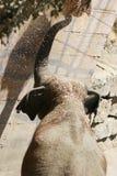 Olifant. stock foto