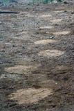 Olifant stock afbeeldingen