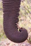 Olifant Stock Foto