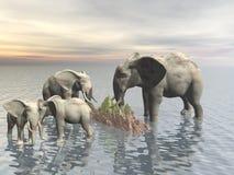 Olifant Stock Afbeelding