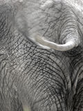 Olifant 6 Royalty-vrije Stock Afbeeldingen