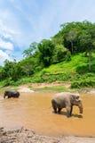 Olifant in beschermd aardpark stock afbeeldingen