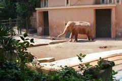 Olifant bij dierentuin Stock Foto's