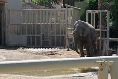 Olifant bij een dierentuin stock foto