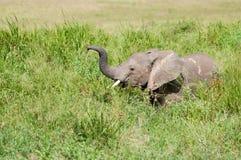 Olifant bij het nationale park van Serengeti, Tanzania, Afrika Stock Fotografie