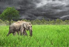 Olifant in de wildernis Regenachtig weer Land van Thailand Royalty-vrije Stock Afbeelding