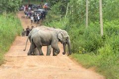 Olifant in de wildernis Regenachtig weer Land van Thailand Stock Foto's