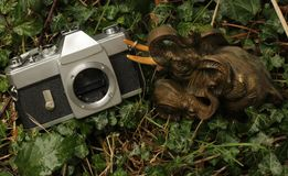 Olifant die een camera vervoeren aan het kerkhof stock fotografie