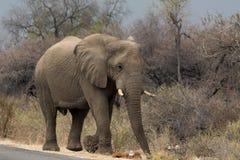 Olifant die langs getarreerde weg lopen Royalty-vrije Stock Fotografie