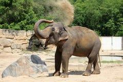 Olifant die overgiet met zand Stock Afbeeldingen