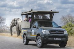 Olifant die Safari South Africa bevlekken royalty-vrije stock afbeeldingen